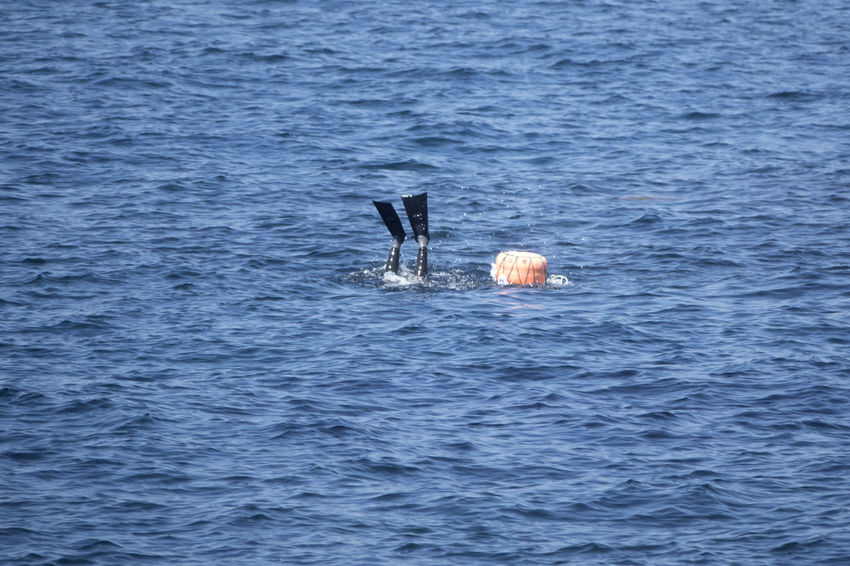 Haenyeos who are female divers picking up sea food in sea. Diving JEJU ISLAND  Beauty In Nature Buoy Day Female Diver Flippers Haenyeo Nature Nautical Vessel No People Outdoors Sailing Sea Water Waterfront