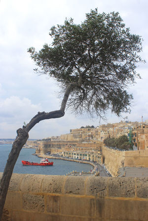 Grand Harbor of Valletta. Malta. Cityscape Water Outdoors Day No People Vacation Travel Blue Malta Grand Harbour Harbor Wall Sandstone Yellow Olive Tree Ship Red