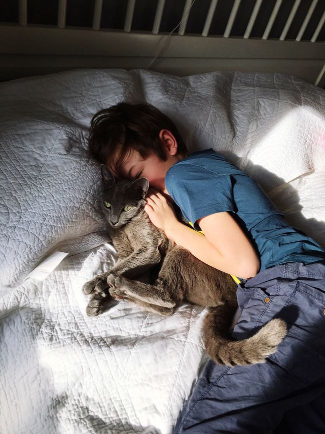 Boy Russian Cat Sun Sunny Saturday . Relax FreeTime Before Birthday Party