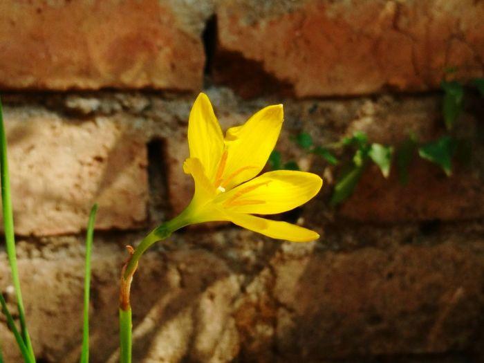 Yellow Flower Flower First Eyeem Photo