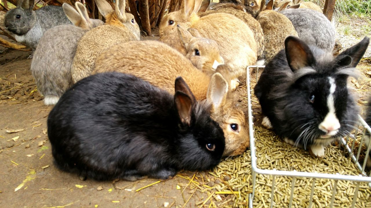 Animal Themes Mammal No People Domestic Animals Young Animal Outdoors Day Pig Nature Piglet Togetherness Hasenglück Zwergkaninchen
