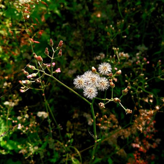 Nature Plant Growth Beauty In Nature Outdoors Flower No People Tree Close-up Day Fragility Spider Web Freshness