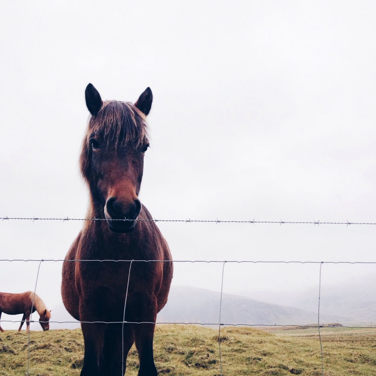 Beautiful stock photos of horse, Animal Themes, Barbed Wire, Clear Sky, Copy Space