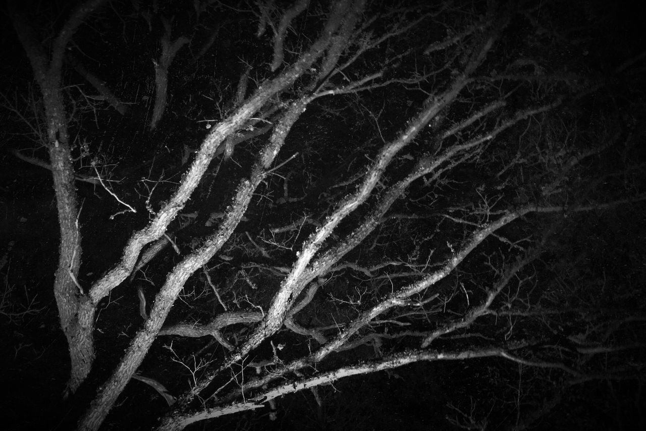 .::Messe Noir::.. Melancholic Landscapes Night Nature MADE IN SWEDEN Black And White Excellence Nightphotography Intense Nothingness Black And White Tree Nothingisordinary Tree_collection  Freezing Outdoors Illuminated Still Life Night Photography Minimalobsession Abstract Abstract Photography Abstractart Minimalism Night View DCLXVI Dark Darkart