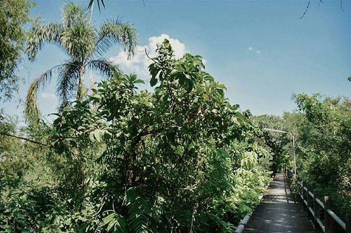 little road Chaophraya River Landscape Bangkrachao Thailand Amazingthailand