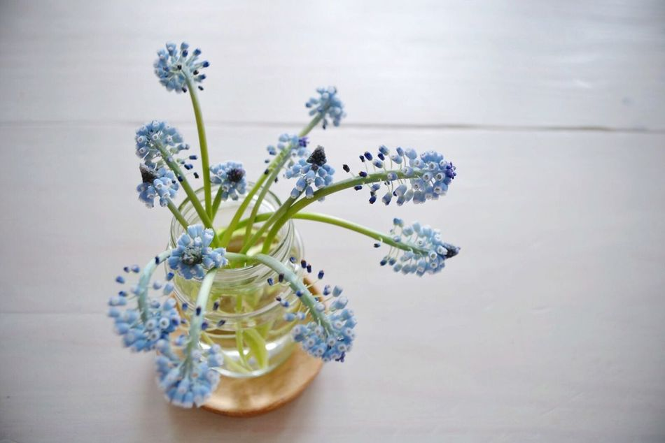 Beautiful stock photos of ostern, Beauty In Nature, Blue, Close-Up, Flower
