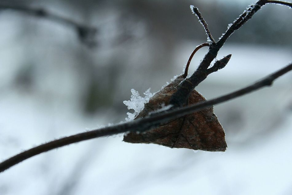 Trickster winter Winter Cold Temperature Snow Tree Branch Frozen EyeEm Bokeh EyeEm Best Shots