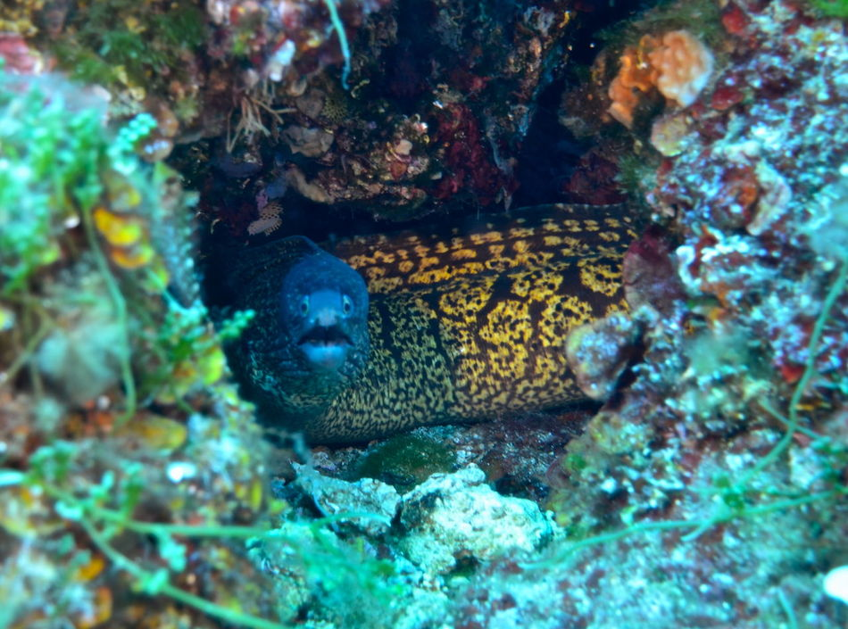 Animal Themes Animals In The Wild Beauty In Nature Day Elba Island  Full Frame Moray Murena Nature No People One Animal Reef Selective Focus Tranquility Vibrant Color Wildlife Zoology