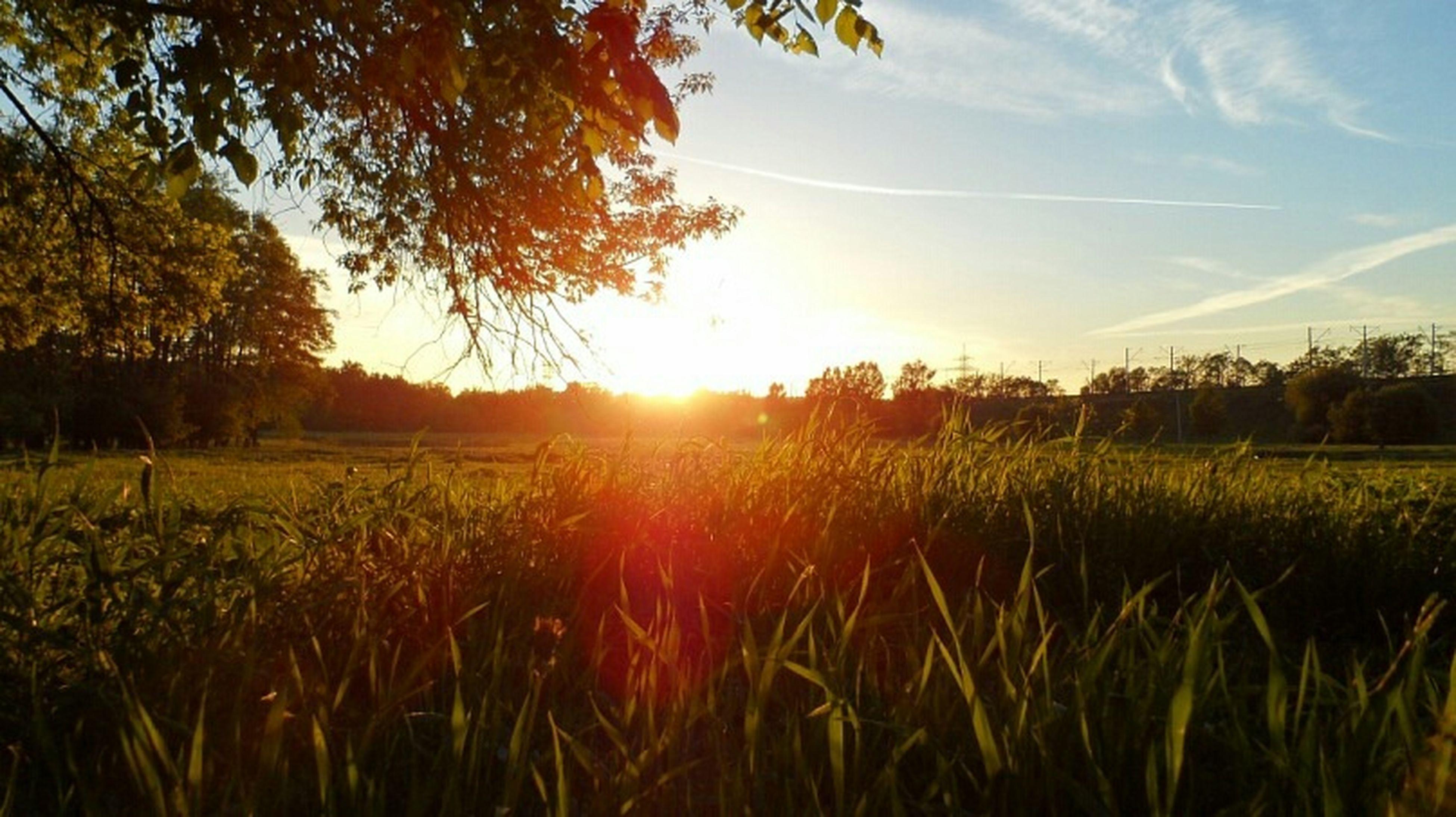 sunset, sun, field, grass, tranquil scene, landscape, tranquility, growth, beauty in nature, scenics, nature, sky, sunlight, rural scene, plant, tree, sunbeam, orange color, idyllic, lens flare