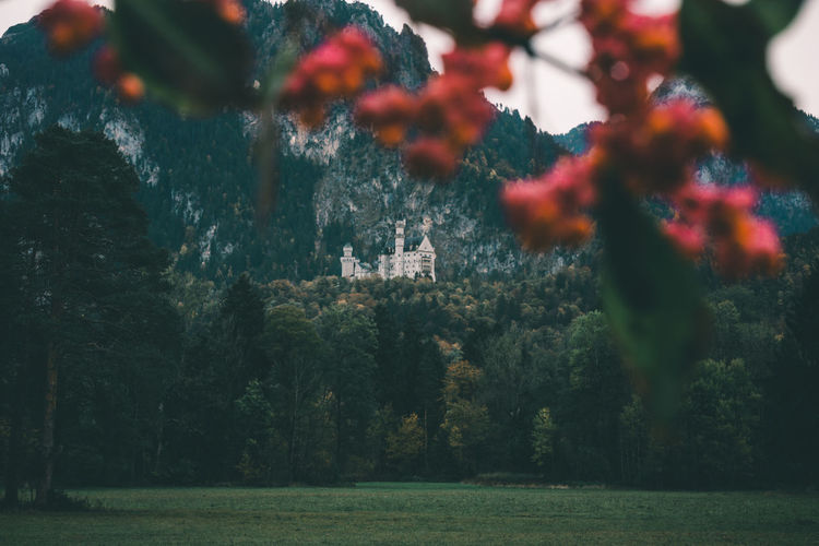 Neuschwanstein castle from a different point of view Ancient Bavaria Bay Beauty In Nature Bokeh Castle Castles Deutschland Europe Frame Freshness Germany Green Color Hiding History King Landmarks Nature Neuschwanstein No People Old Times Outdoors Postcard Queen Tree