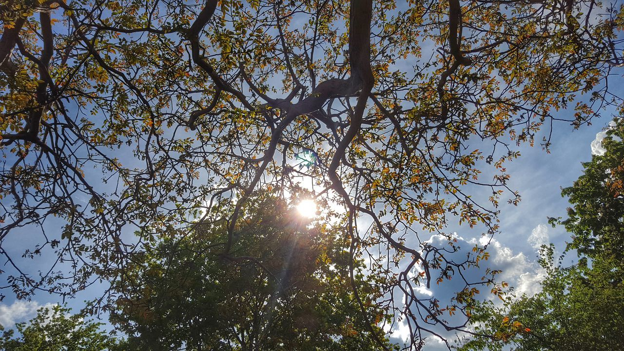 Sunlight Emitting From Branches During Sunny Day