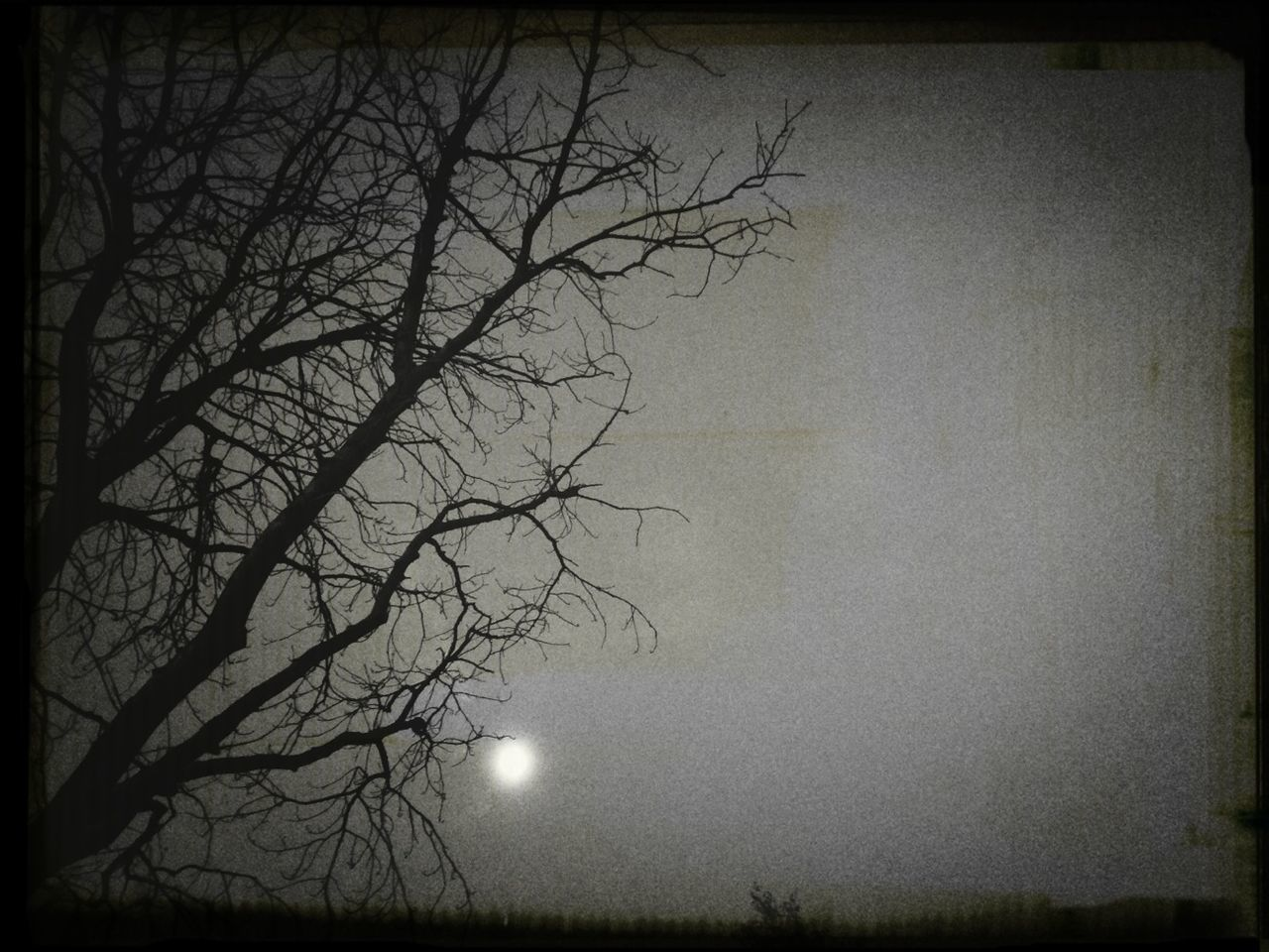 bare tree, tree, night, moon, beauty in nature, branch, nature, landscape, outdoors, no people, sky