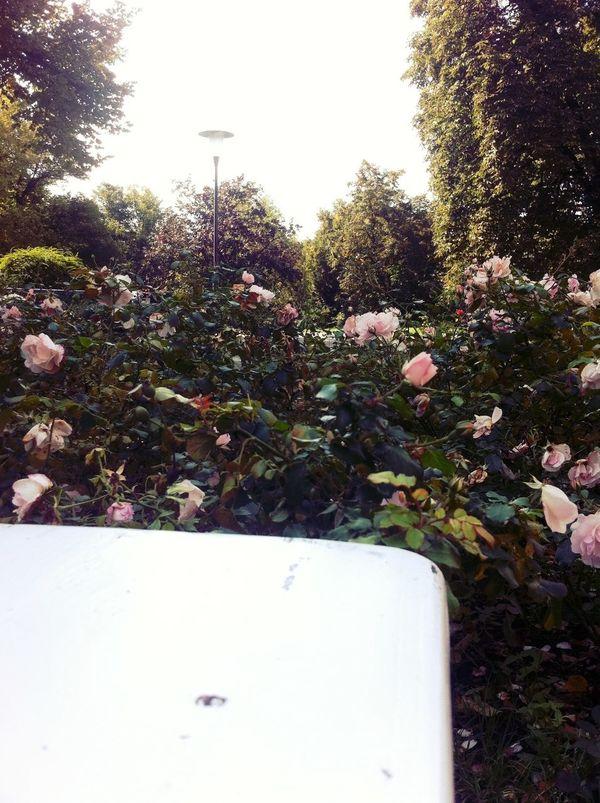 working outside at Rosengarten Rosengarten Working Outside