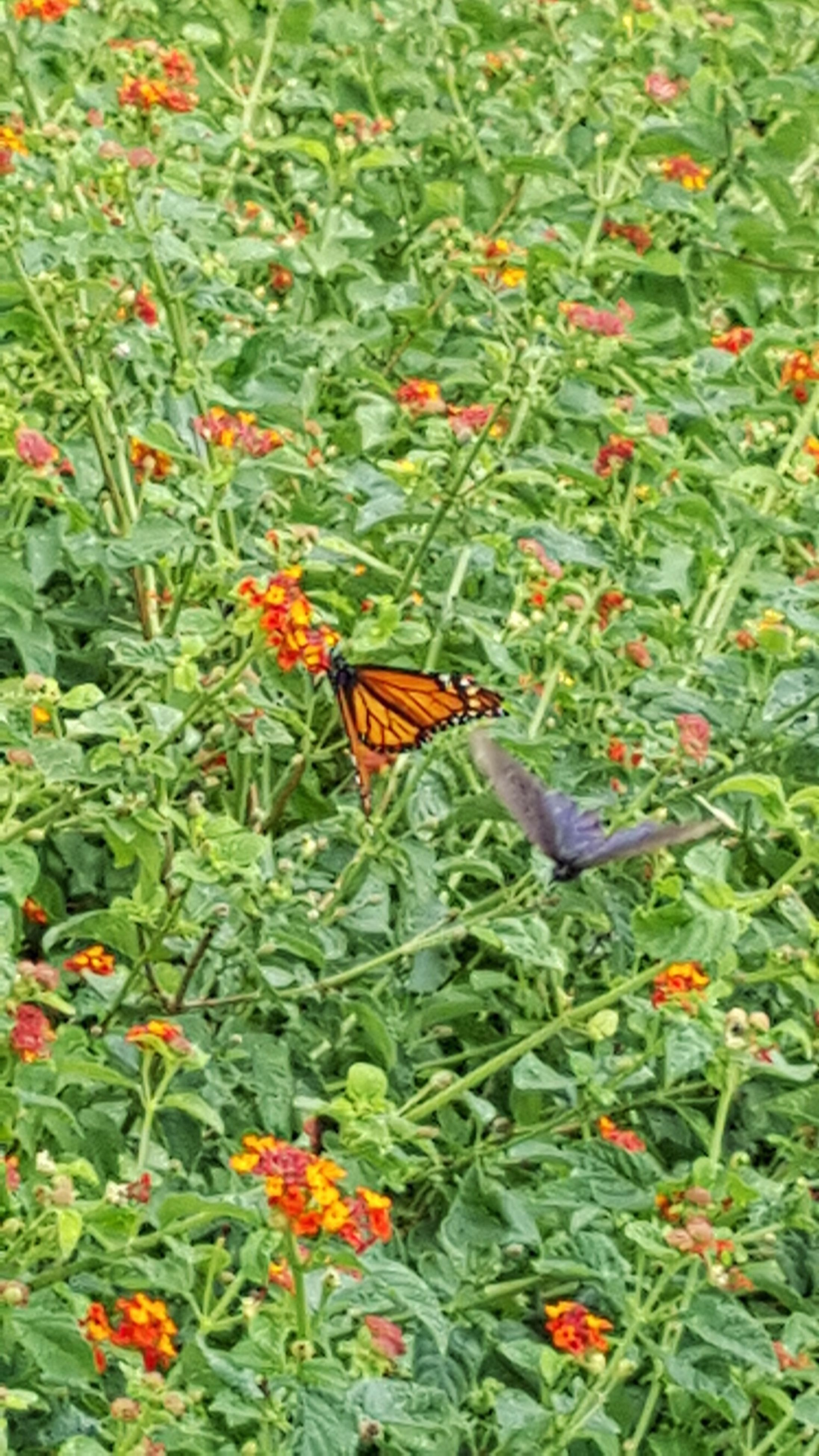 animals in the wild, animal themes, one animal, flower, insect, wildlife, plant, growth, green color, freshness, beauty in nature, nature, high angle view, orange color, butterfly - insect, leaf, fragility, red, day, outdoors