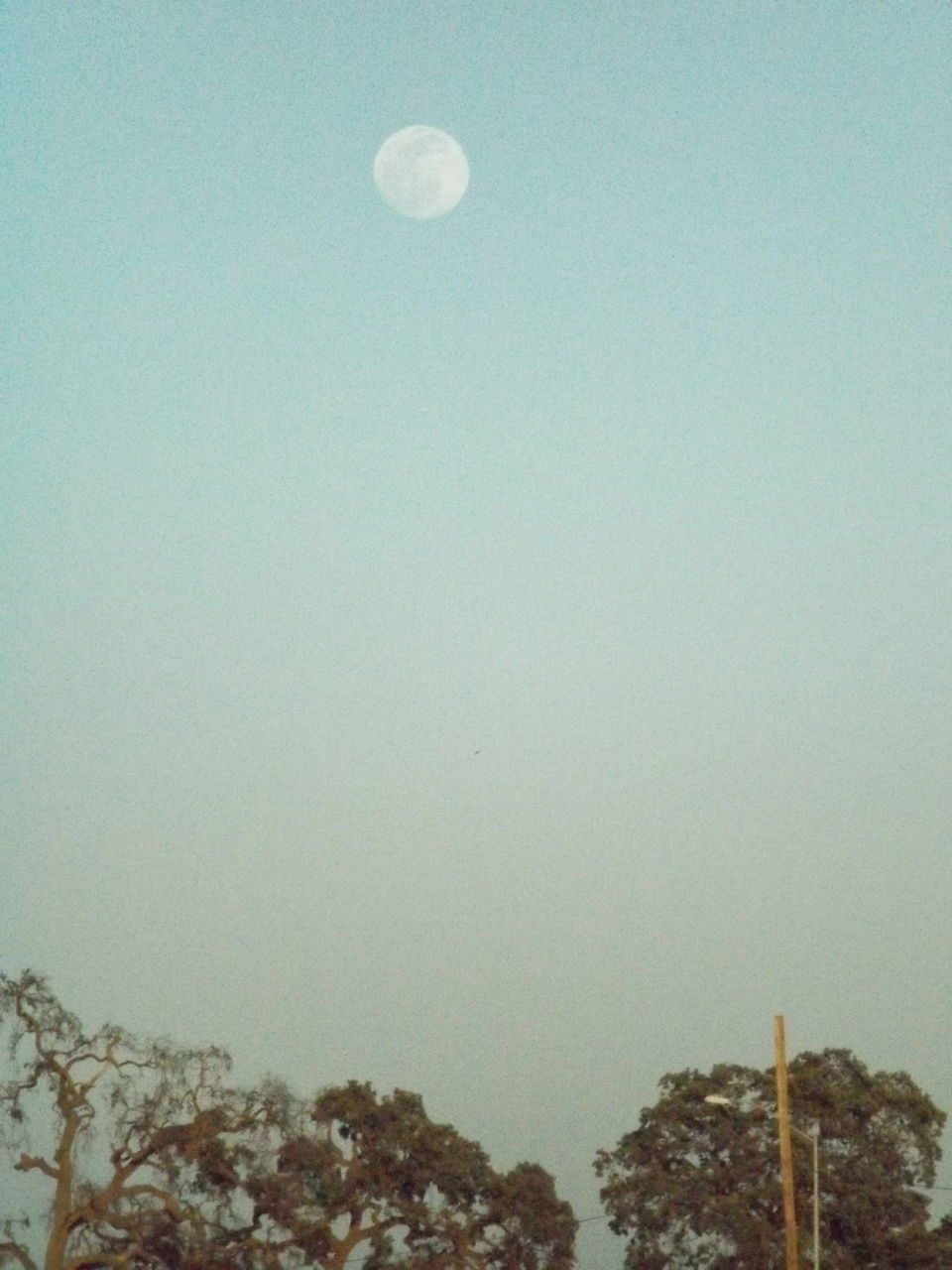 moon, nature, clear sky, no people, sky, outdoors, beauty in nature, architecture, crescent, tree, day, astronomy