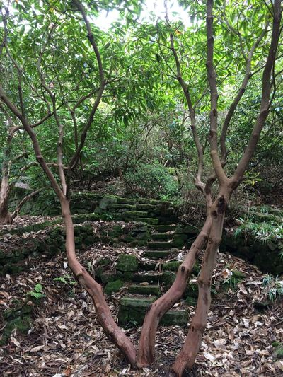 Lea Gardens 🌺 Tree Steps gardens beautiful Spectacular Branches And Leaves Beauty In Nature Beautiful Location 💕