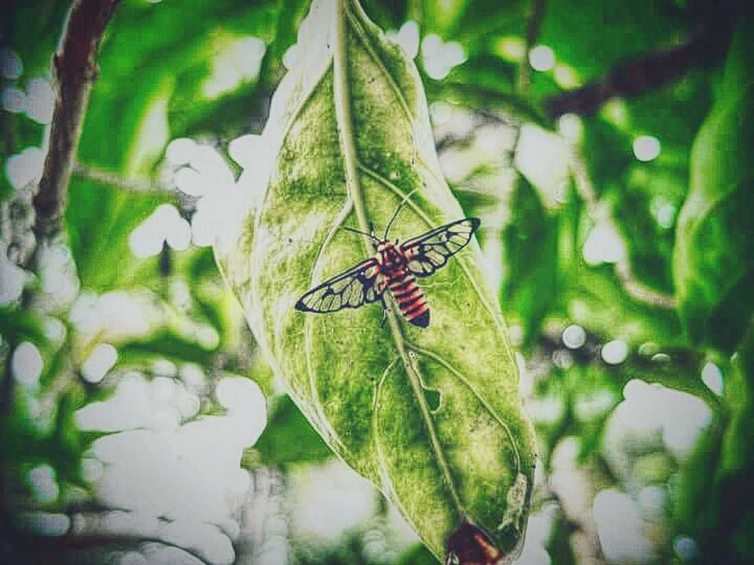 Insect Green Nature Insect Leaves Plants And Garden Mobile Photography Fresh On Eyeem  The Week Of Eyeem My Capture  EyeEm Nature Lover The Beauty Of Nature Colour Of Nature EyeEm Malaysia Garden Photography Eyeem Garden Hello World Wings Stopping By Leaf