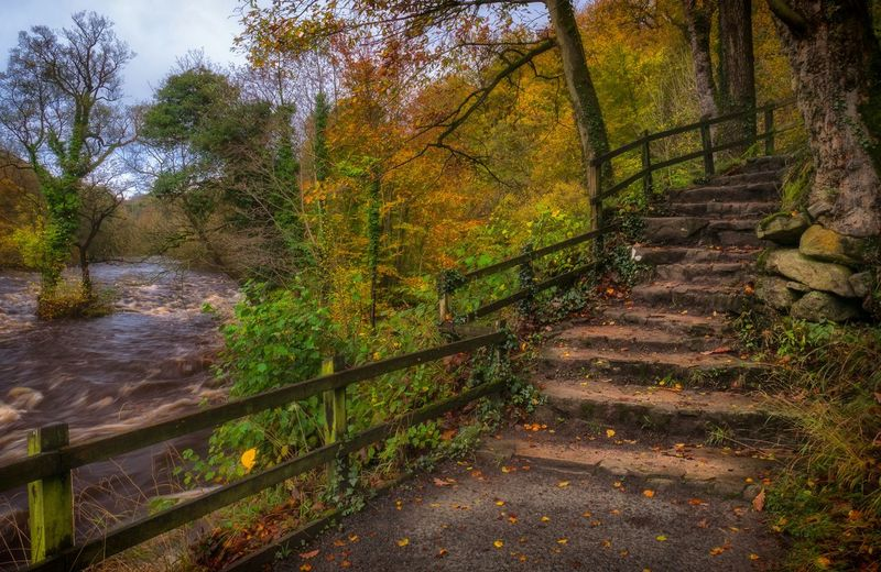 ~Path to desolation~... Tree Growth Nature Beauty In Nature Outdoors Tranquility Scenics No People Streamzoofamily Taking Photos Autumn Colourful Malephotographerofthemonth Landscape Landscape_Collection Tranquil Scene Landscape_photography EyeEm Best Shots LumixG80 Colour Colours Foliage Tranquility Flowing Water River