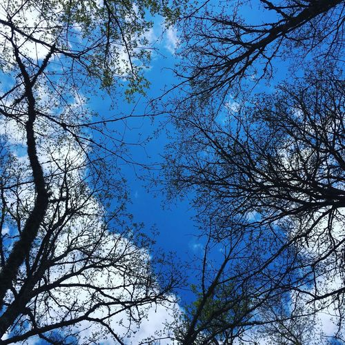 Tree Branch Low Angle View Beauty In Nature Nature Bare Tree Day Outdoors Growth Sky No People Tranquility Blue Scenics Flower Clear Sky Fragility Freshness