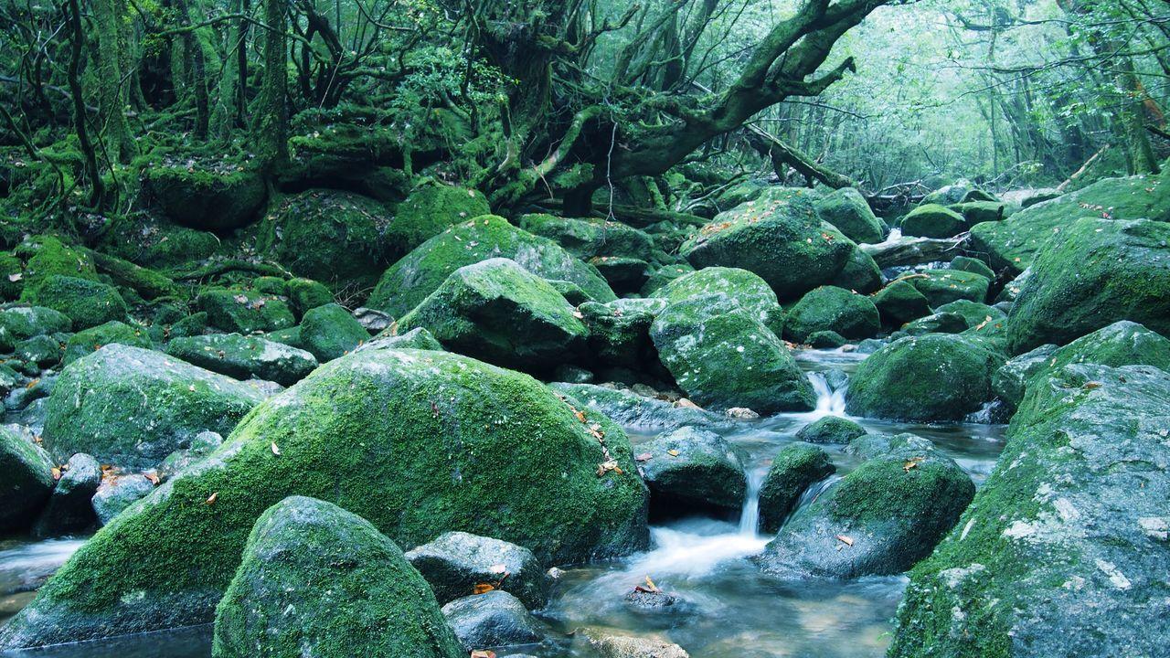 屋久島 (Yakushima Of The World Natural Heritage) Nature EyeEm Best Shots