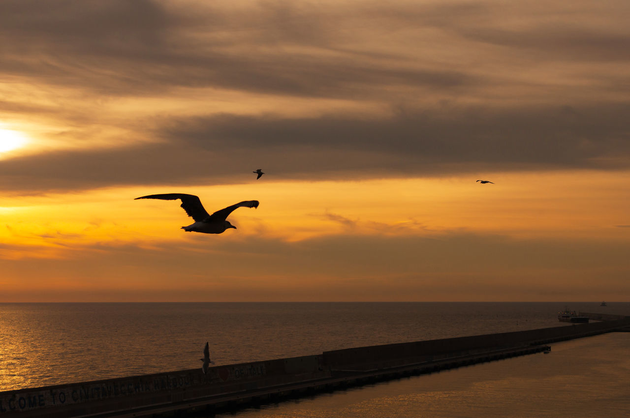 sunset, flying, silhouette, bird, mid-air, sky, animals in the wild, animal themes, cloud - sky, one animal, spread wings, nature, animal wildlife, sea, beauty in nature, dusk, water, outdoors, scenics, horizon over water, seagull, no people, day