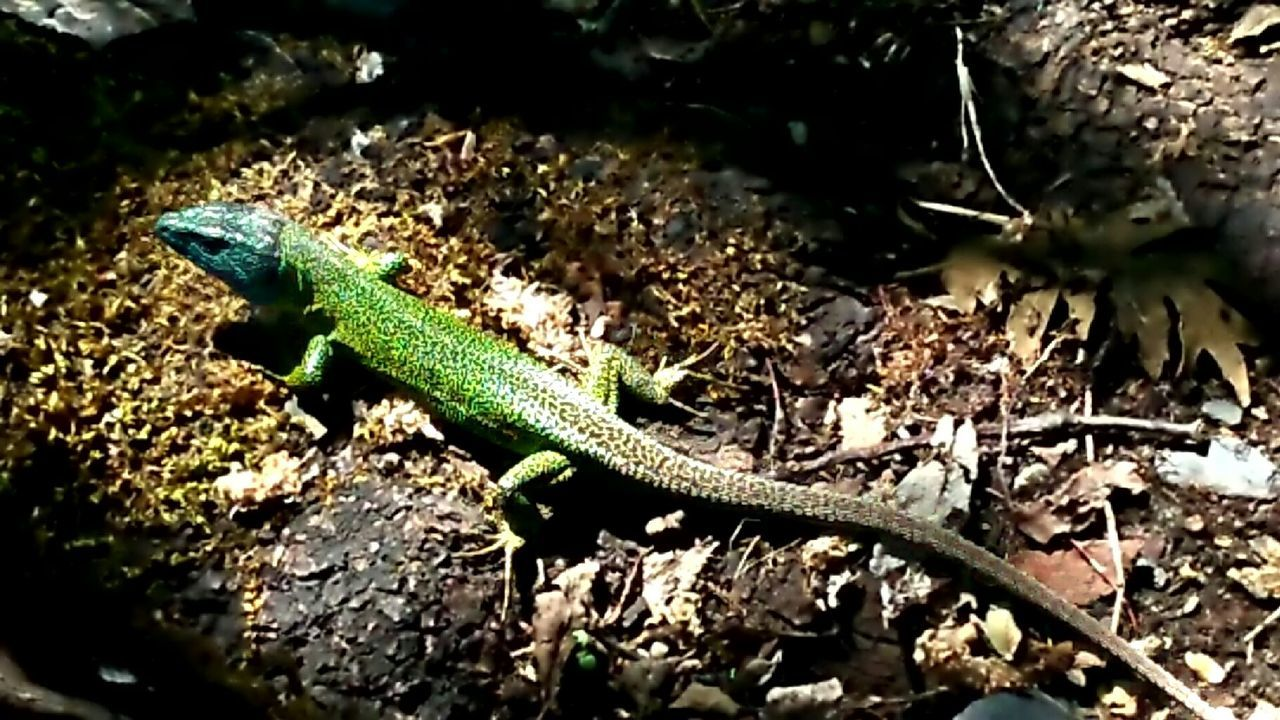 one animal, animals in the wild, animal themes, reptile, animal wildlife, nature, no people, green color, day, outdoors, close-up, beauty in nature