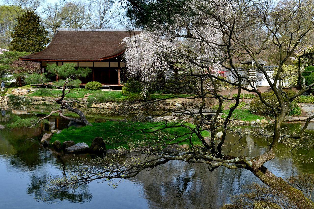 Philadelphia Fairmountpark Japanese Garden Japanese Tea Garden Cherry Blossoms Beautiful Place Showcase April
