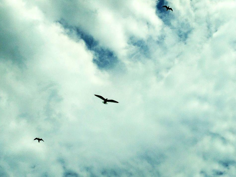 State Park  Seagulls Lake Huron Pure Michigan Sky Clouds Showcase June