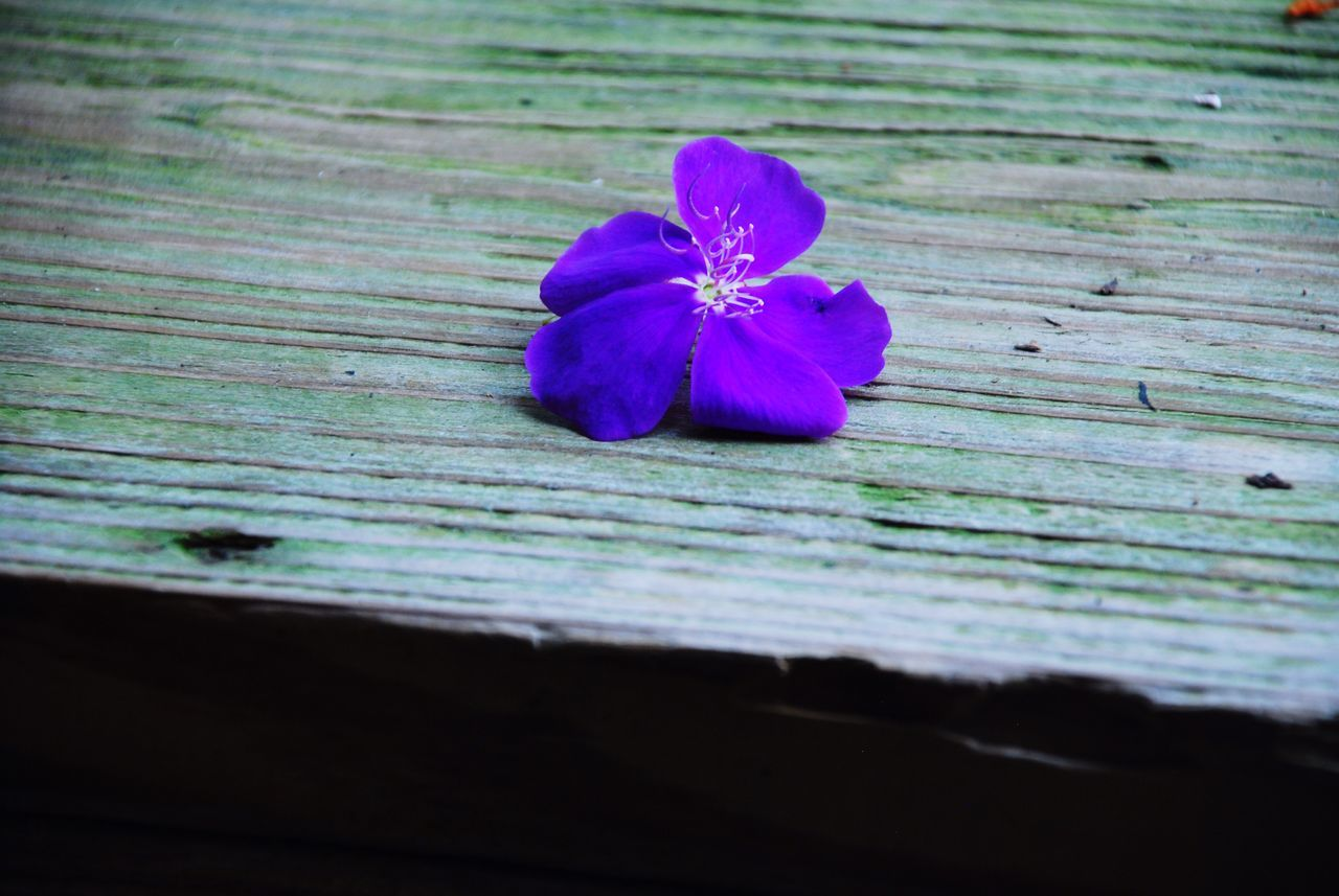 flower, wood - material, no people, fragility, close-up, petal, nature, beauty in nature, flower head, freshness, day, outdoors