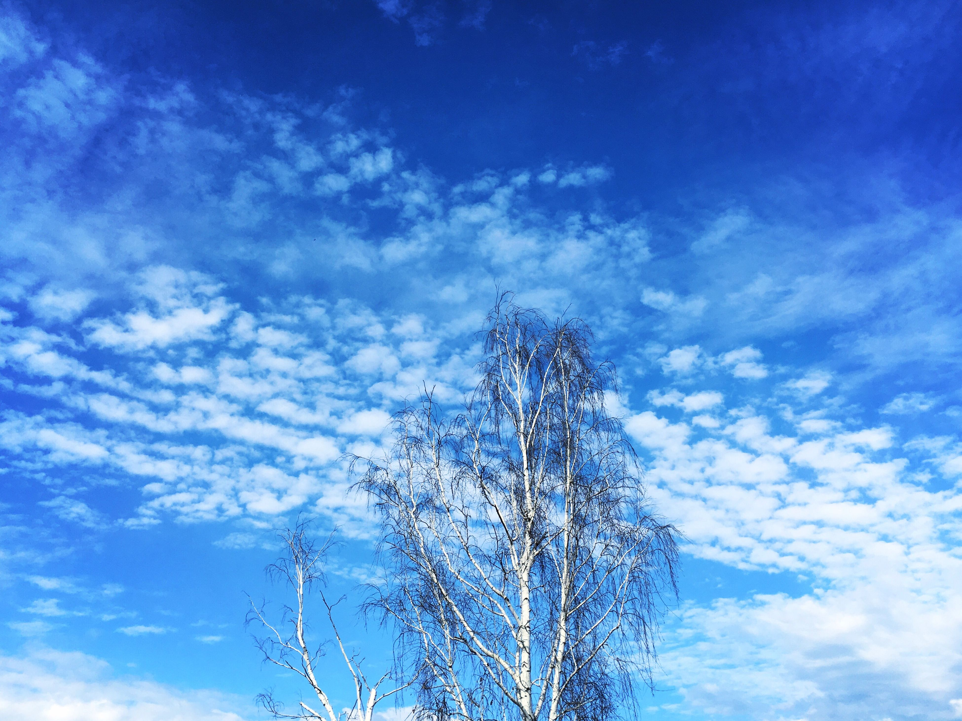 low angle view, sky, blue, bare tree, nature, tranquility, cloud - sky, beauty in nature, tree, cloud, branch, growth, silhouette, scenics, outdoors, tranquil scene, day, no people, power line, cloudy