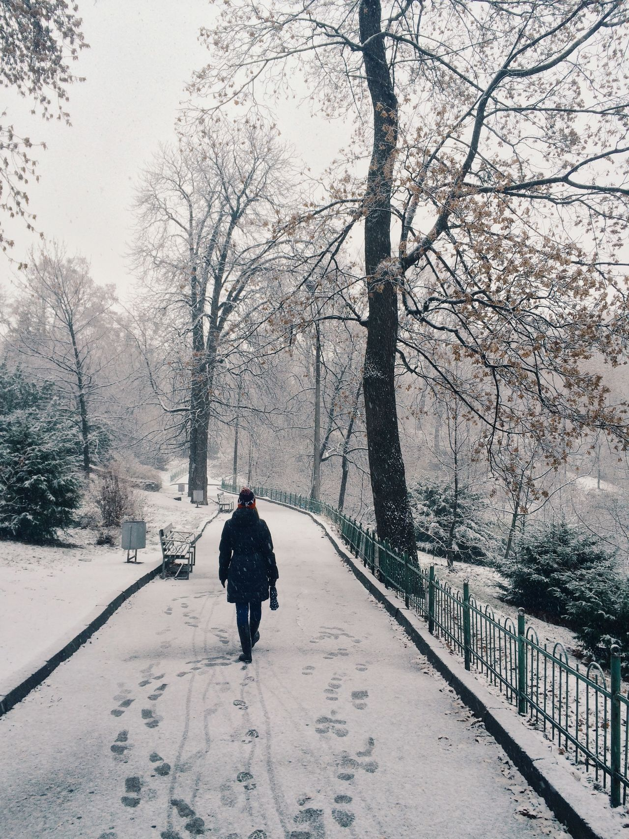 Beautiful stock photos of ukraine, Branch, Cold Temperature, Day, Diminishing Perspective
