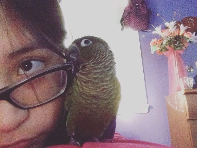 Peanut only likes me for my glasses Conure Greencheekconure