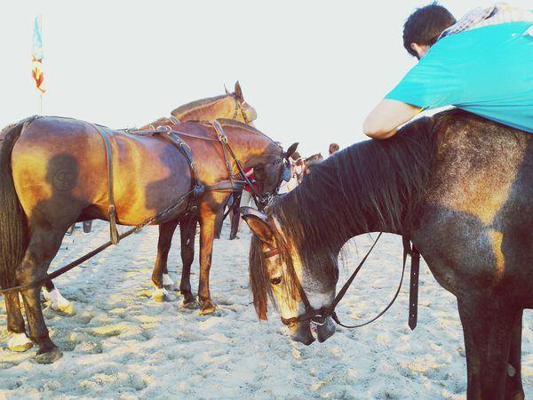 Horse Riding Horses Blue Shirt Beach Sand Mediterranean  Spanish Style SPAIN Spanish