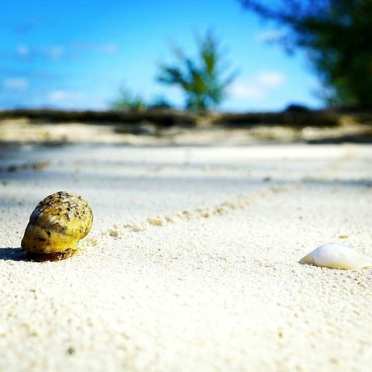 Animal Themes Animals In The Wild Beauty In Nature Outdoors Close-up No People Beach Sand Nature Day Sky Sea Life Turks And Caicos Turks And Caicos Islands Bythesea Photographer Snail🐌 Snail Trail Snail Photography EyeEmNewHere The Week On EyeEm