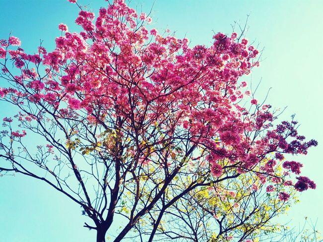 Agosto se empieza a sentir en la ciudad! :) Beautiful Nature Love Pink