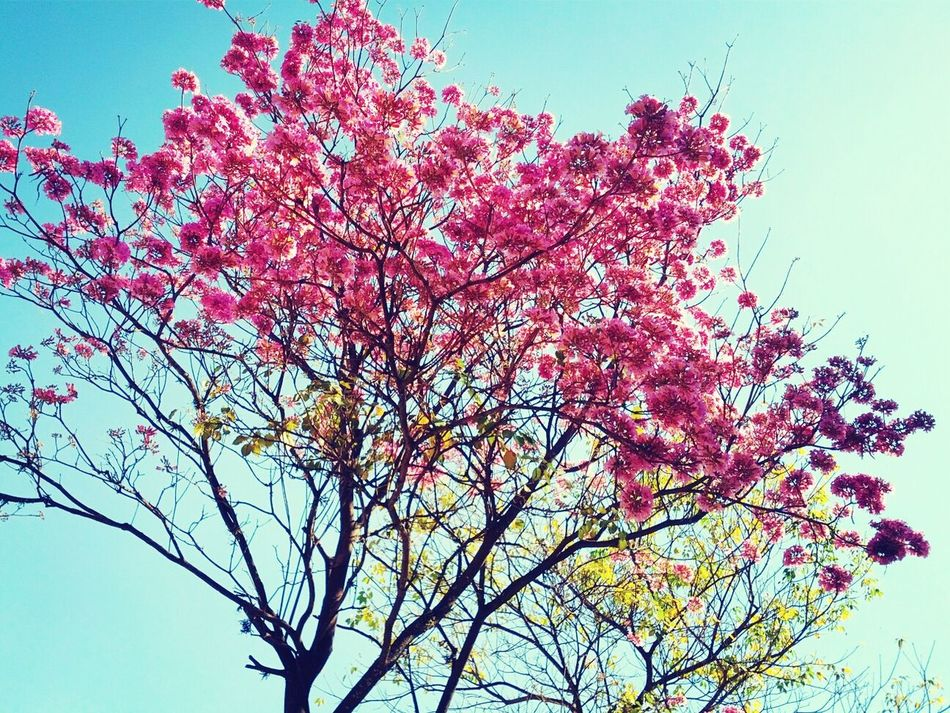 Agosto se empieza a sentir en la ciudad! :) Beautiful Nature Love Pink