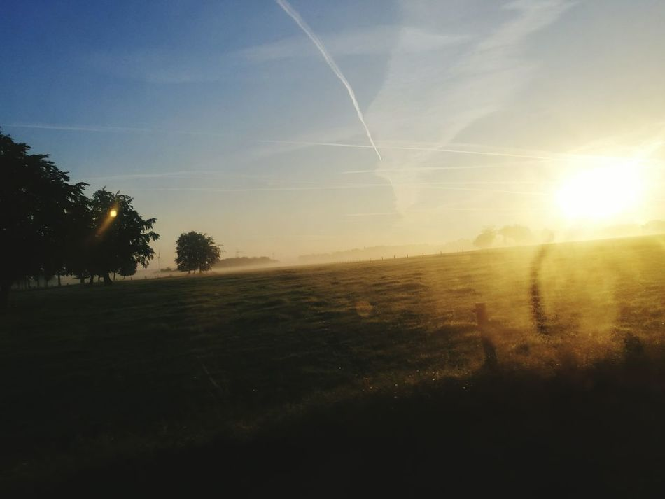 This picture is taken from the bus but I still think it has something that makes it special... Even if you see the dirty glasses :D. Sun Sunlight Landscape Beauty In Nature Grass Tranquil Scene Field Tree Sky Nature Majestic Benito Werner Motombo's World Hello World The Great Outdoors - 2016 EyeEm Awards Beauty In Nature EyeEm Best Shots Moments-2015 Eyeem Awards Sunrise Special in Rollesbroich, Eifel Germany