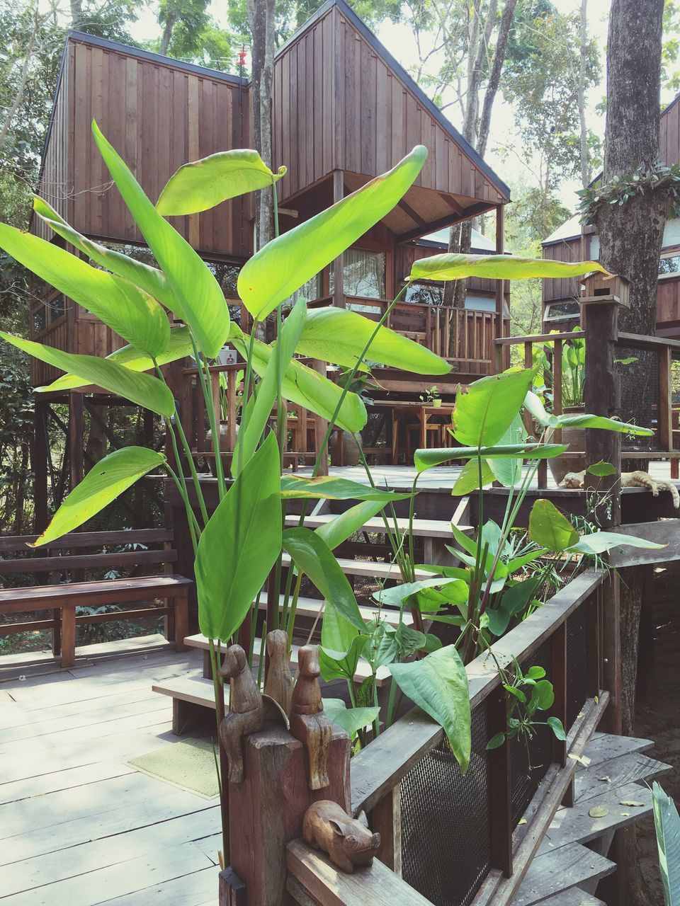 growth, leaf, plant, green color, no people, built structure, day, outdoors, building exterior, banana tree, architecture, tree, nature