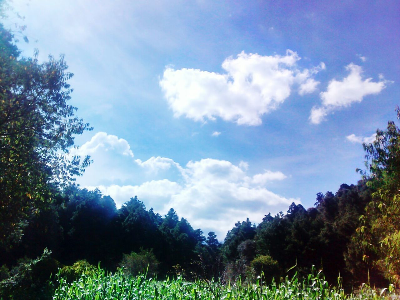 Tree Cloud - Sky Nature Forest Tranquility Beauty In Nature Korn Fields