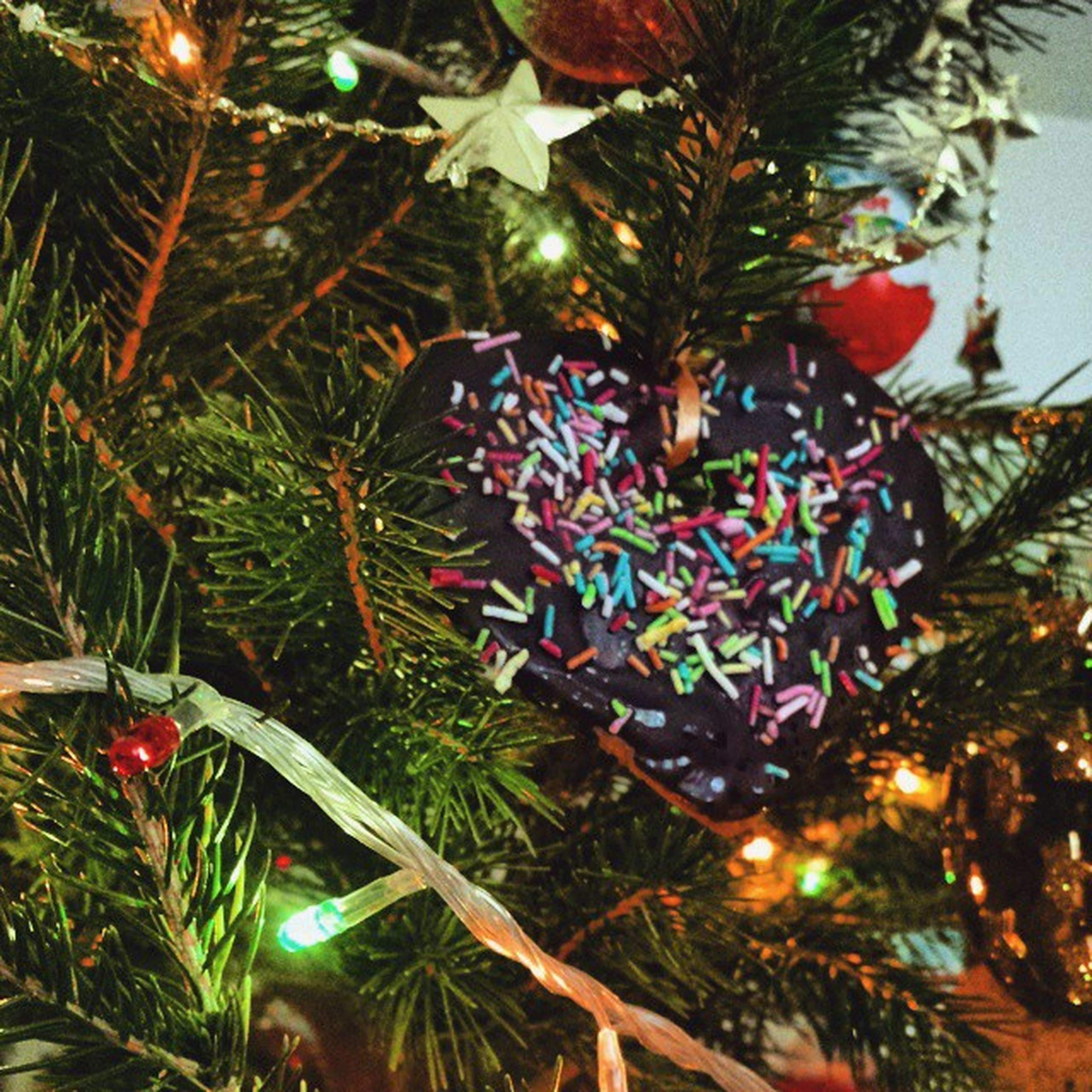 low angle view, tree, celebration, multi colored, palm tree, growth, christmas, decoration, christmas tree, leaf, branch, christmas decoration, illuminated, outdoors, nature, hanging, no people, christmas lights, beauty in nature, colorful