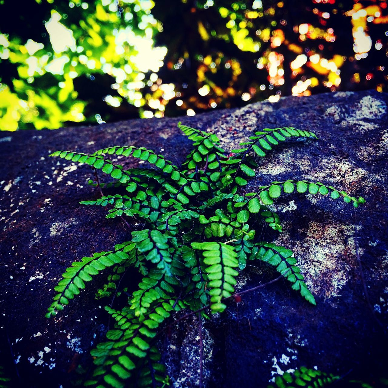 Close-Up Of Fern Growing On Rock