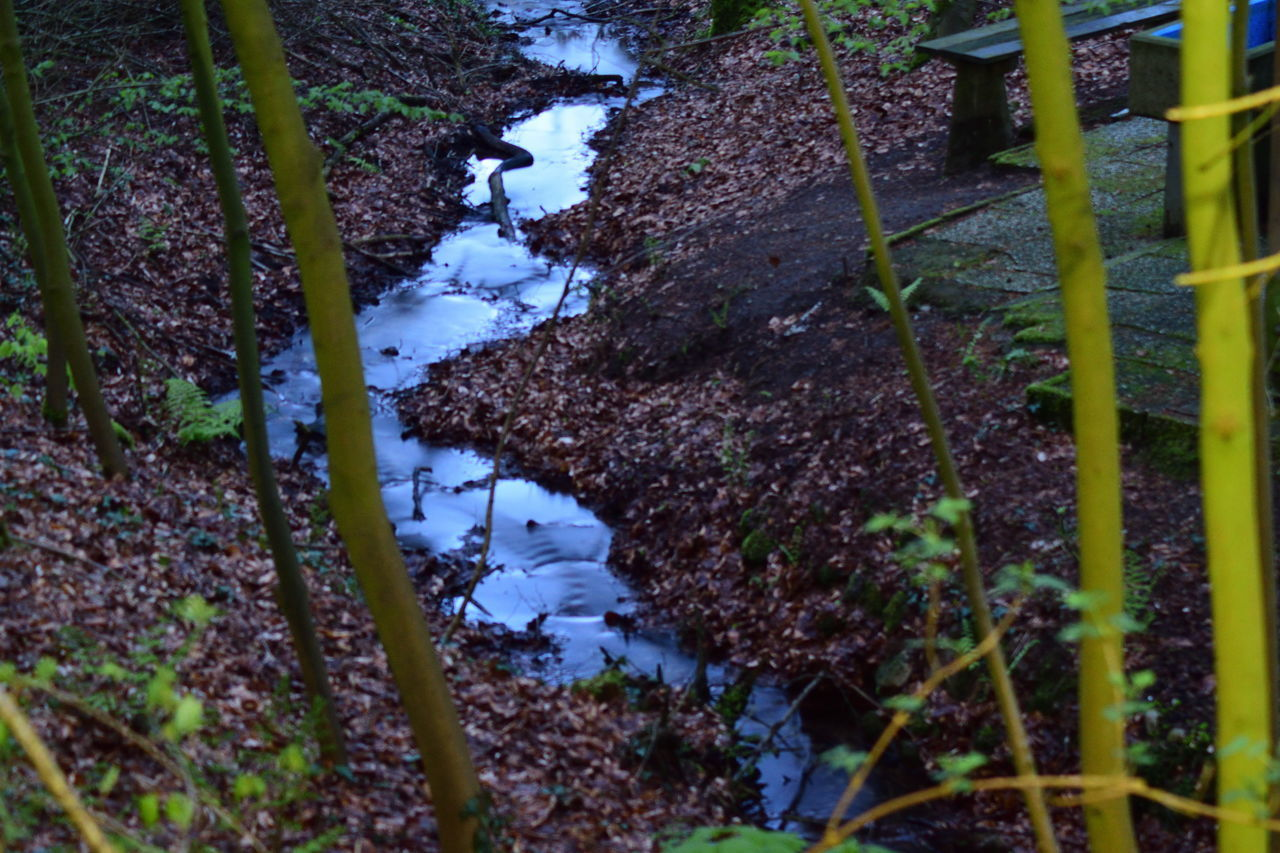 High Angle View Of Headwater Flowing In Forest