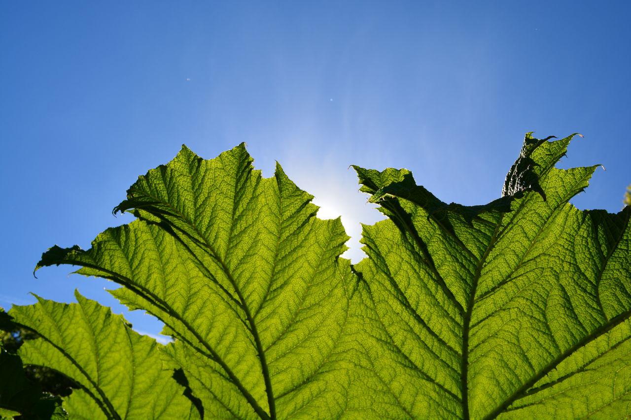 Beautiful stock photos of sunshine, Clear Sky, Flora, Green, Greenery