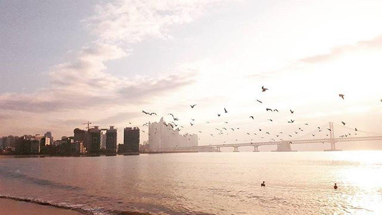 . . . 부산 Busan Bada 바다 일상 데일리 사진 여행 일상공유 맞팔 Sotong 미러리스카메라 Follow Followme Photo Travel Daily Southkorea