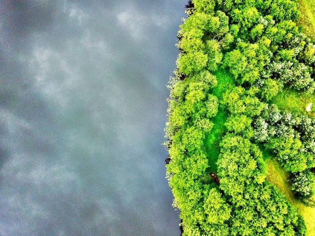 Lake and green Green Color Sky Low Angle View Tree Cloud - Sky Nature Growth No People Day Beauty In Nature Outdoors Plant Freshness Branch Close-up