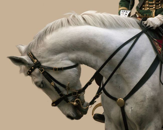 Hussar on his horse Animal Animal Body Part Animal Themes Close-up Curiosity Domestic Animals Focus On Foreground Herbivorous Horse Hussar Hussard Mammal Side View Zoology