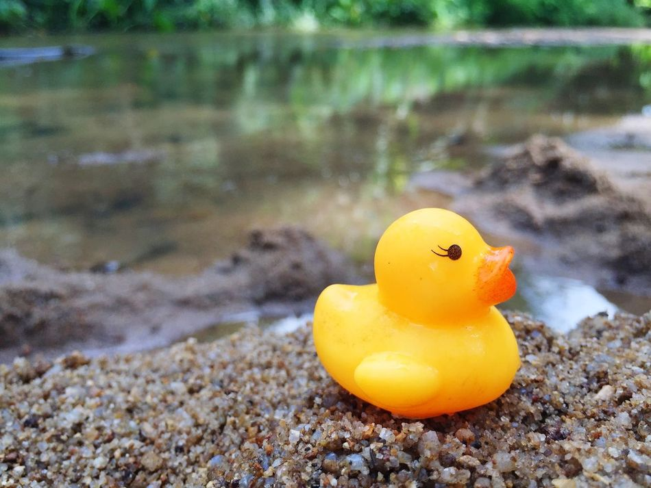 My Rubber Duck Yellow Swimming Nature River