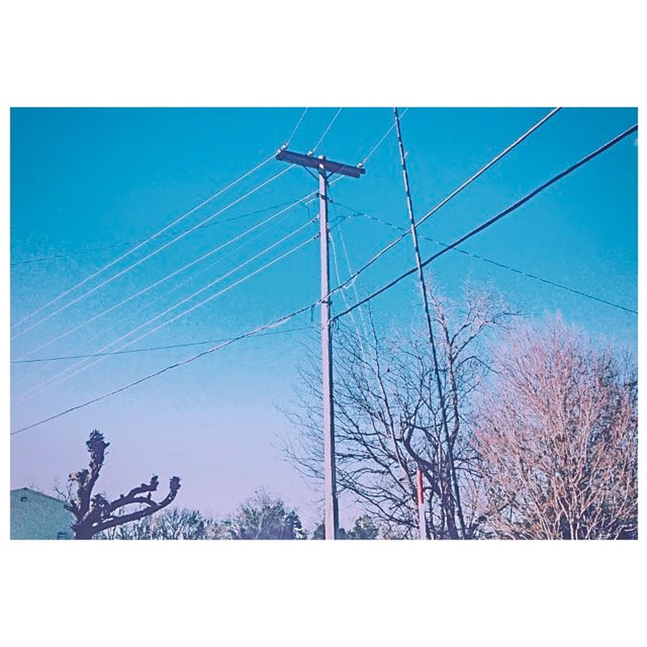 cable, fuel and power generation, electricity, outdoors, electricity pylon, day, power line, power supply, connection, bare tree, tree, silhouette, sky, low angle view, clear sky, blue, rural scene, cold temperature, winter, business, people, only men, wind turbine, nature, telephone line, one man only, adult