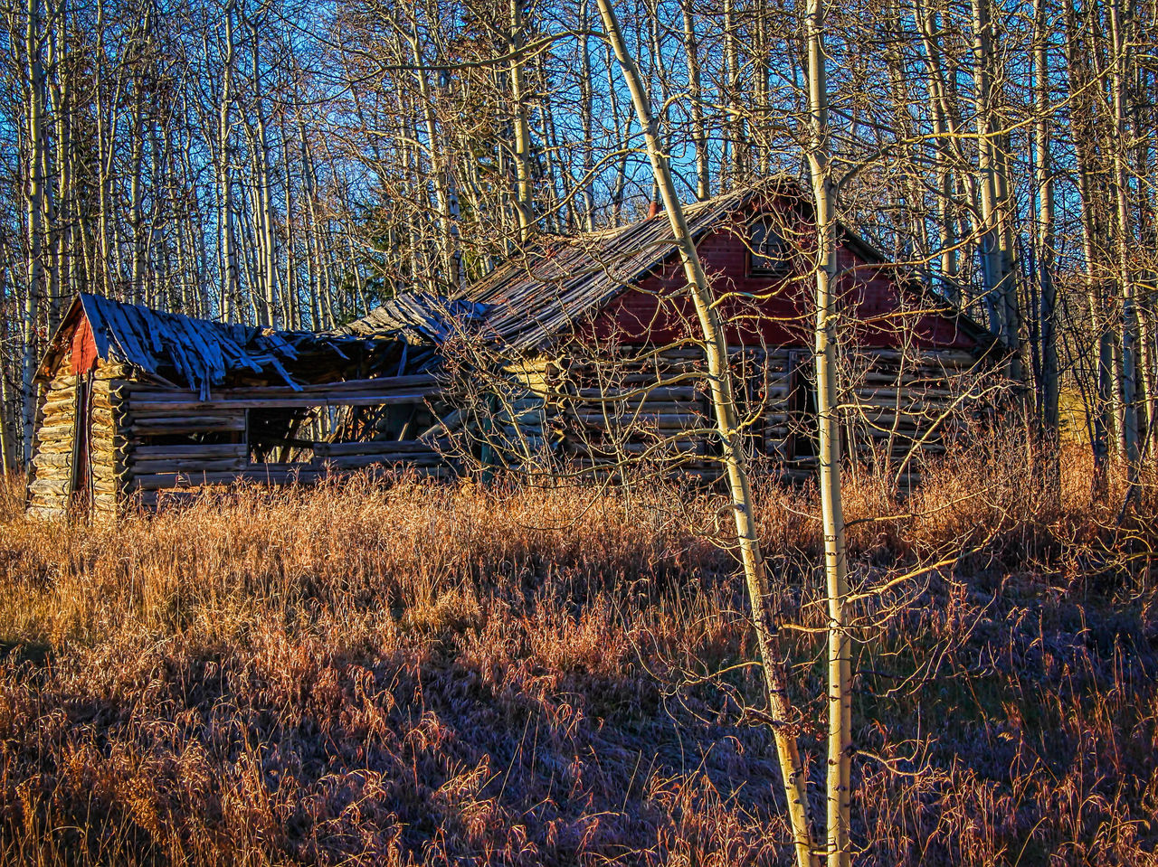 This old cabin Abandoned Cabin Driving Around Grass No People Outdoors This Old Cabin Trees Water Valley