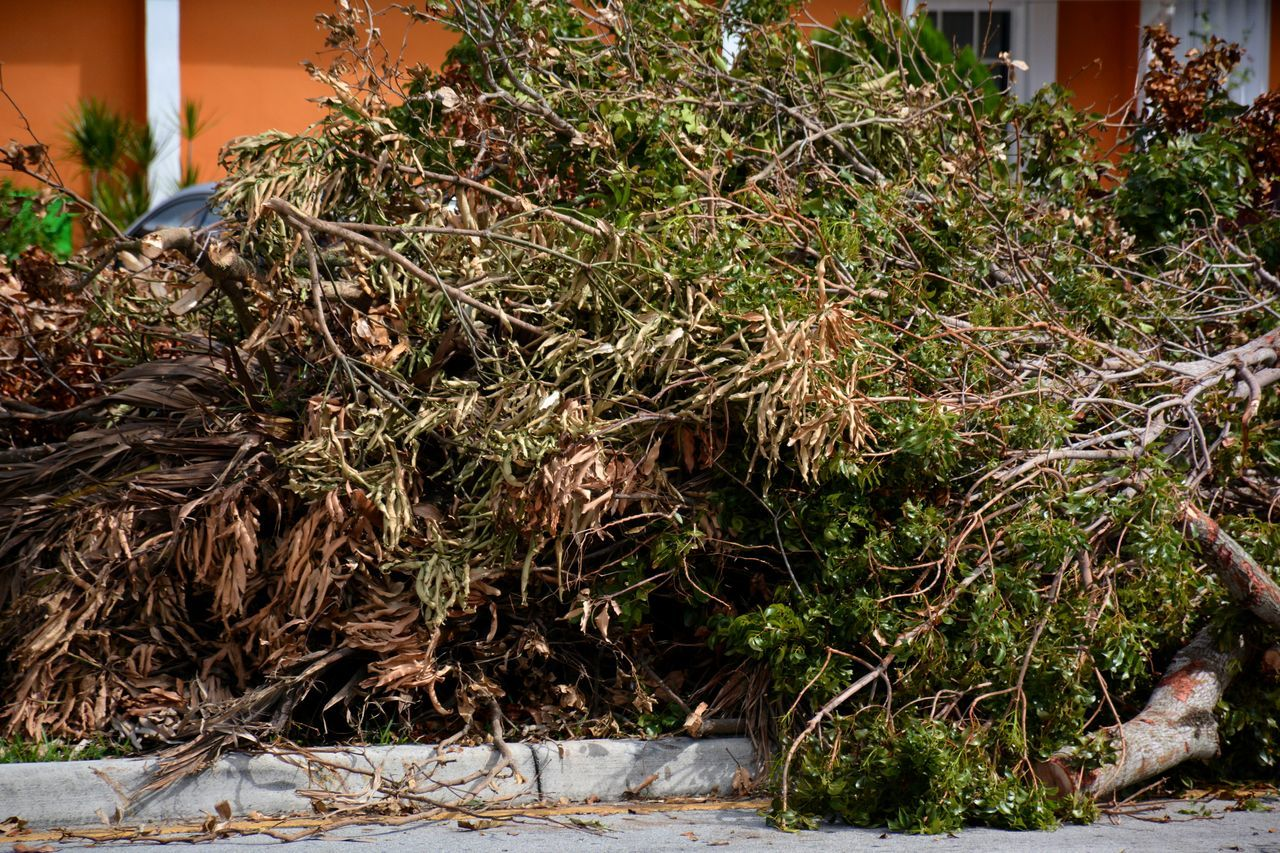 Aftermath of Hurricane Irma 2017 South Florida Hurricane Irma 2017 Storm Debris Outdoors Tree Downed Trees Hurricane Season  TreePorn Downed Tree Hurricane Damage Full Frame Aftermath Fallen Tree Hurricane No People Debris Hurricane Season  Piles Of Wood Roadside Damages